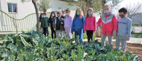 Στο πλαίσιο του προγράμματος «Stream Steps» οι μαθητές της Β΄ Δημοτικού επισκέφτηκαν τον σχολικό λαχανόκηπο.